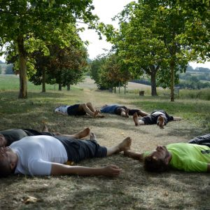 stage systema libre comme arbre